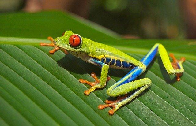 frog adopt